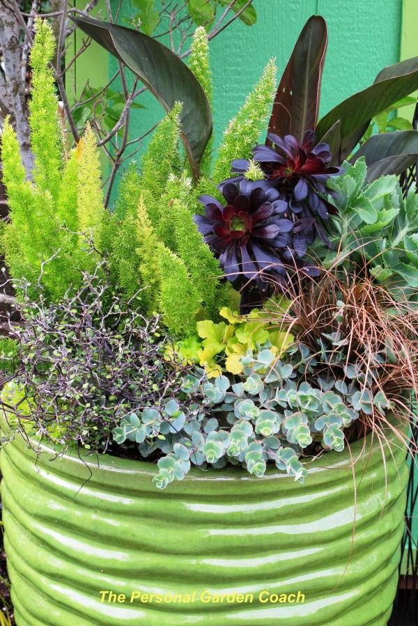 wordless wednesday container garden