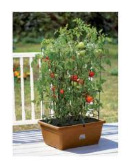 Kit de cultivo Takla