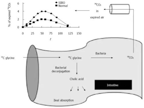 Figure 3 Bile Acid Breath Test Involving Bile Acid and Glycocholic Acid Image 4