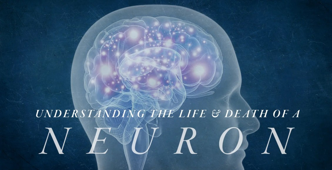 Understanding the Life and Death of a Neuron | El Paso, TX Chiropractor