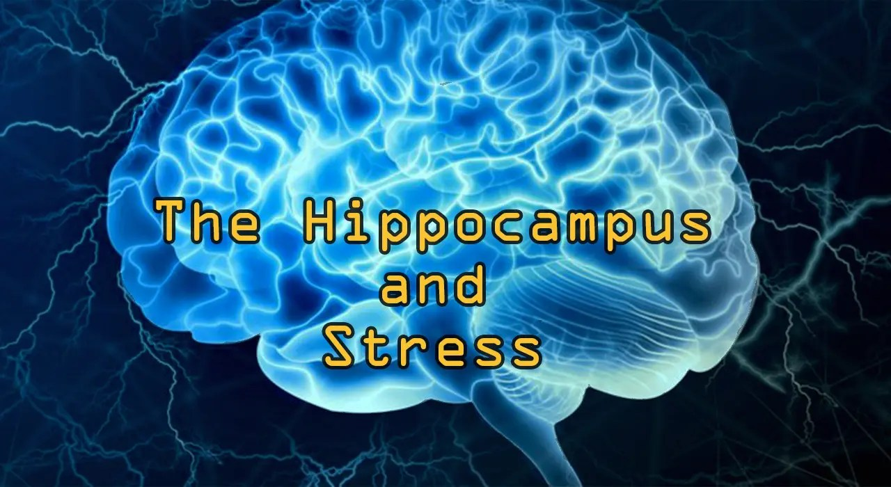 Functional Endocrinology: The Hippocampus and Stress