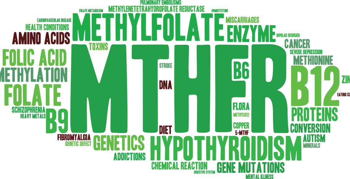 MTHFR Mutación Genética y Salud | El Paso, TX Quiropráctico