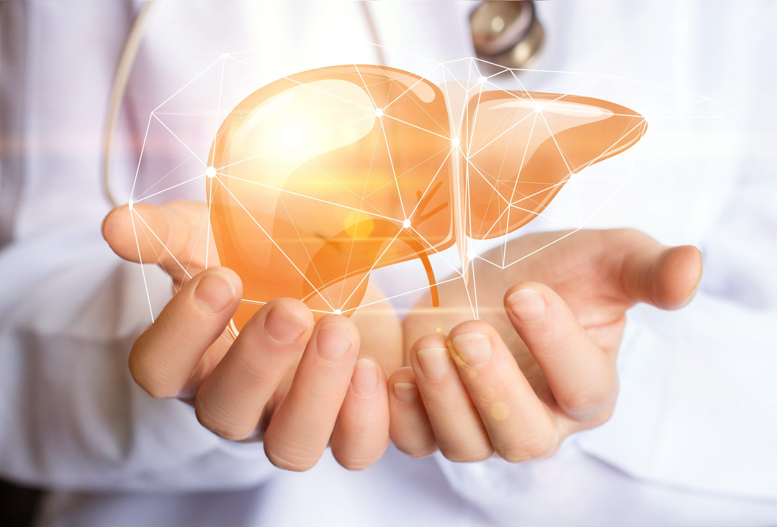 What are the Phases of Liver Detoxification?