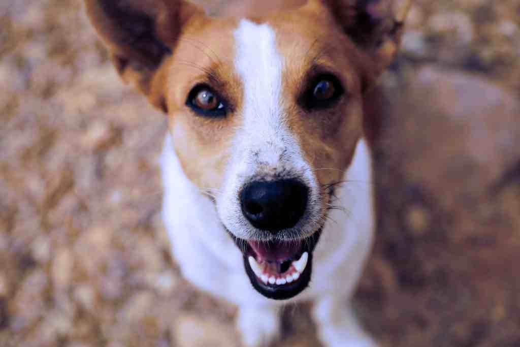 Pet Friendly Landlord- PersonalProfitability.com