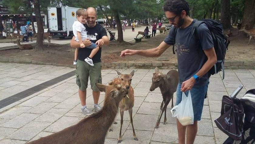 Giappone con bimbi: Nara