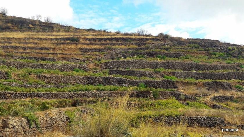 I tipici terrazzamenti con i muretti a secco di Pantelleria