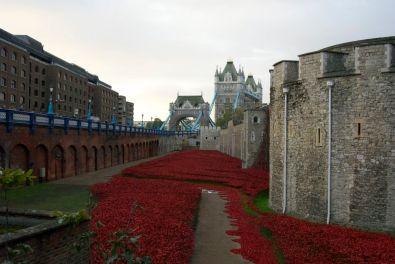 Poppies and Tower Bridge