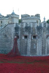 Poppies cascade from Tower's window