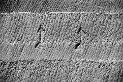 Segmented chisel tracks in the Ptolemaic part of the Gebel el-Silsila sandstone quarry. The two large 'quarry marks' at center (resembling a harpoon or arrow combined with the numeral four) and another smaller, fainter one at upper left (a harpoon only) symbolized the god Horus but may also have had some meaning related to the quarrying process (NILSSON forthcoming). Photo by JAMES HARRELL.
