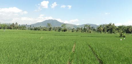 Apa Dan Bagaimana Pertanian Sehat Pertanian Sehat Indonesia