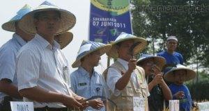 Panen raya program pemberdayaan petani sehat - Cianjur 2011
