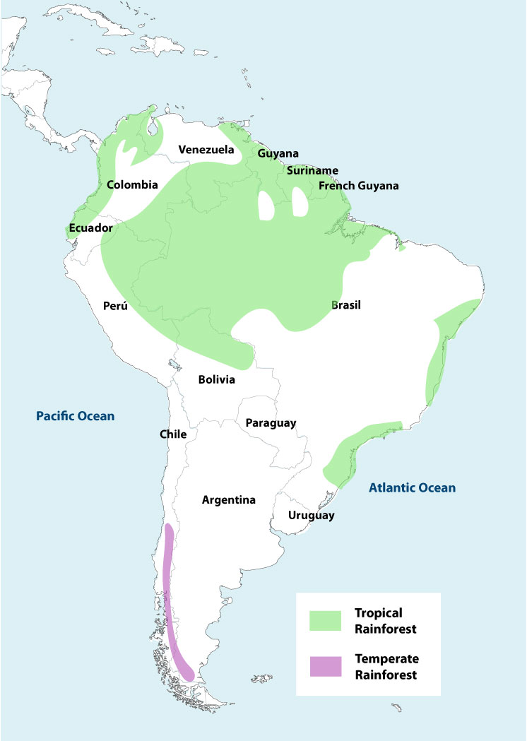 How Much Of The Amazon Rainforest Is Left? - WorldAtlas