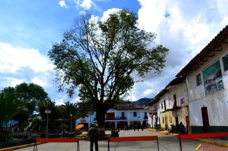 Inmenso árbol que adorna la plaza de San Luis