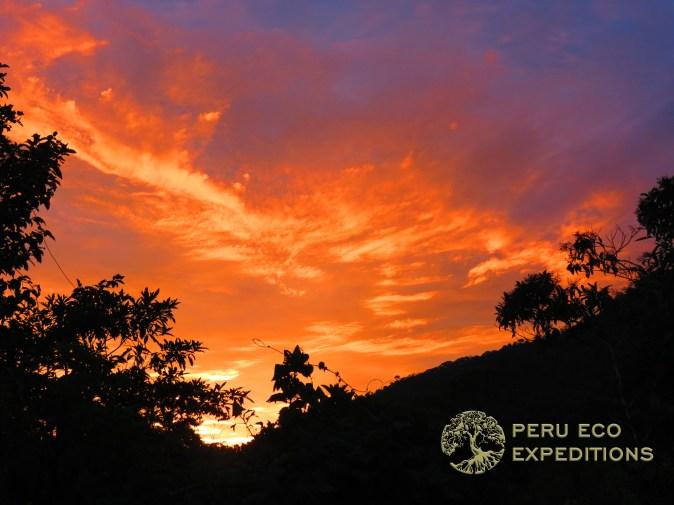 Tres Cruces Amazon Trek (Manu Biosphere Reserve) - Peru Eco Expeditions