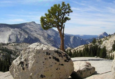 Ketika Pohon Dan Batu Sujud