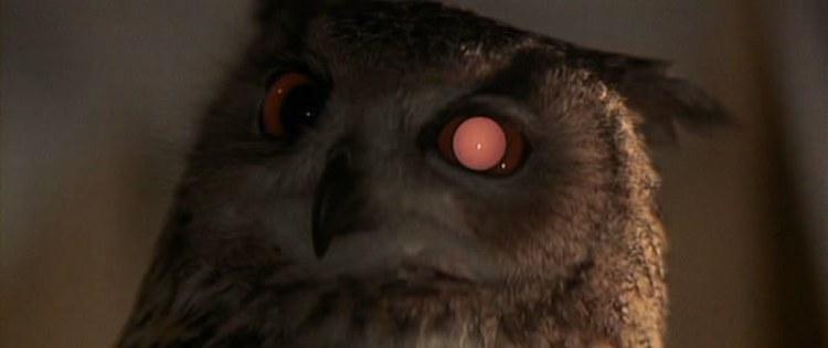 imagen-2-ojos-bc3baho