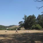 herdinggeese