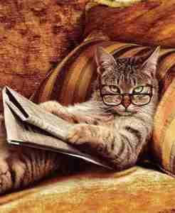 gato lendo jornal