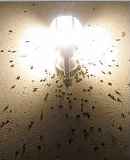 Do yellow light bulbs really keep bugs away?