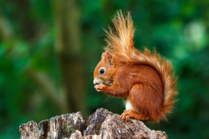 What Does a Baby Squirrel Eat? Comprehensive Guide