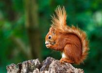 Do Squirrels Hibernate? A Detailed Insight Into Squirrel Hibernation