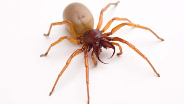 araignées cloportes