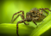 Are Wolf Spiders Dangerous? A Detailed Insight into Wolf Spiders