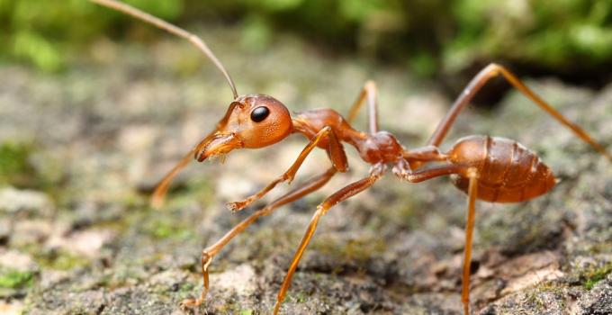 Moisture Ants