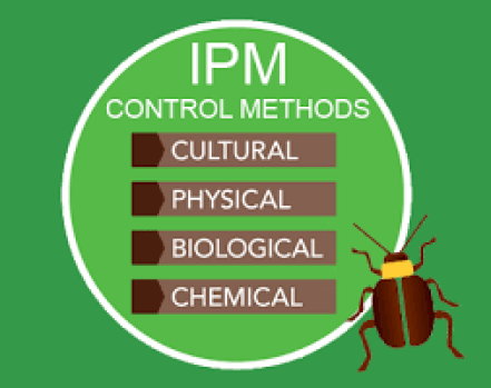 what is an ipm