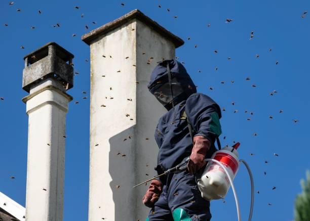 Winter pest invasion