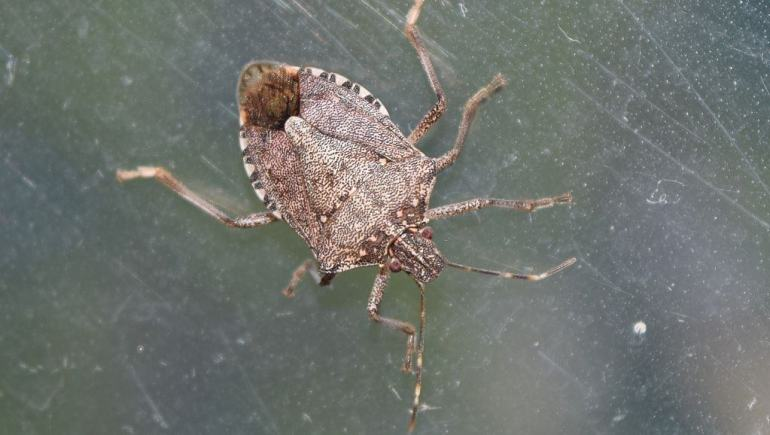 common fall pests