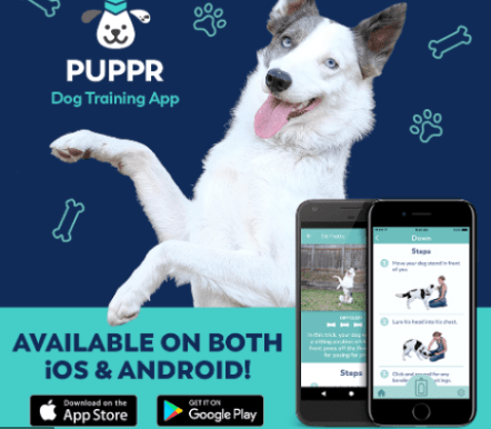 Cloud Pet Apps for IOS and Android Pet Owners