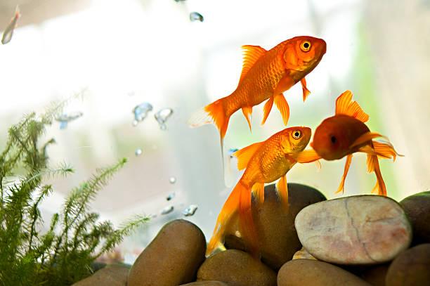 How to get rid of snails in aquarium