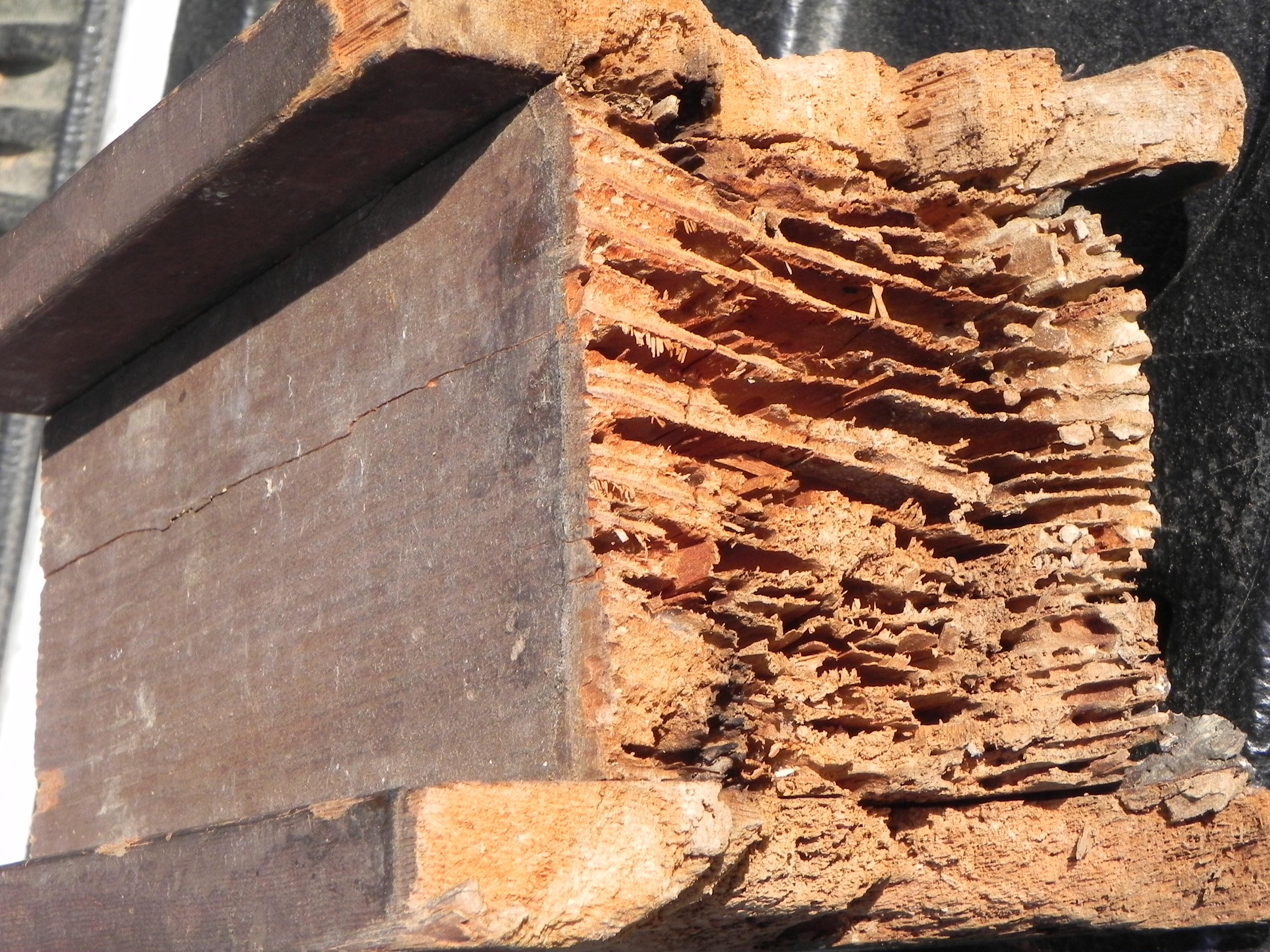 Termite Images Of Termite Damage