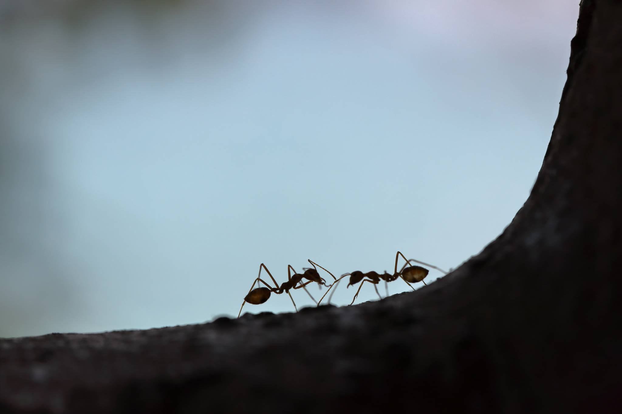 How to stop ants invading your home