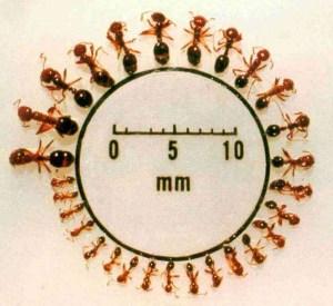 عن النمل