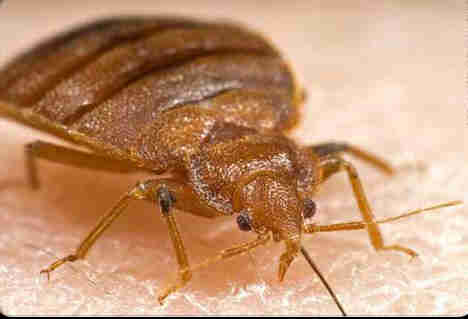 Dragnet To Kill Bed Bugs PEST CONTROL CANADA