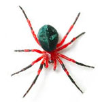 red-and-black-spider