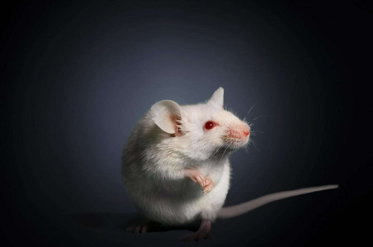 Do Mice Squeak When Trapped? - Pest Control Zone