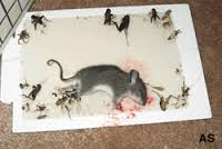 Mice Trap Rat Trap Mouse Trapper Glue Board Sticky Mouse