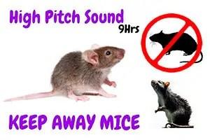 High pitch sound 9Hrs