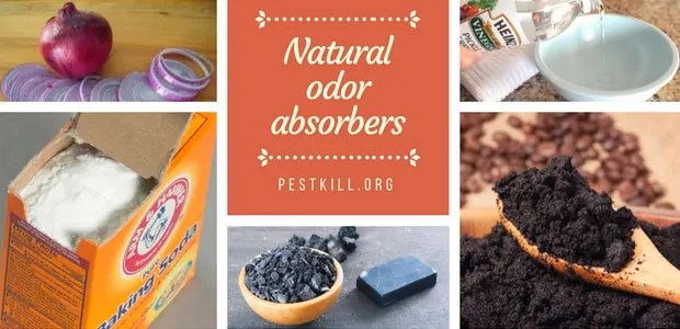Infographic: Natural absorbers