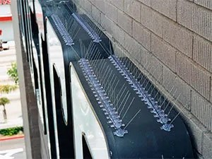 Anti-bird spikes on ledges