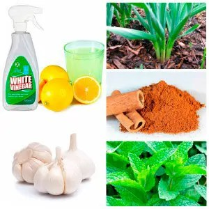 how to get rid of ant hills vinegar