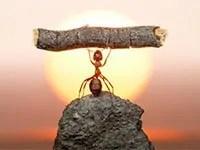 Ants strength