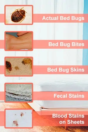 5 Bed Bugs Signs