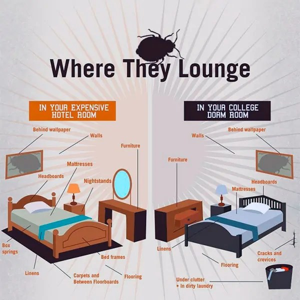 Where Bed Bugs Lounge