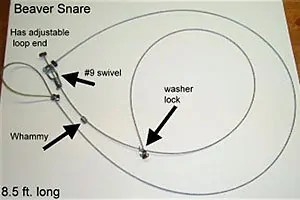 Beaver Snare