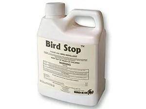 Bird Stop