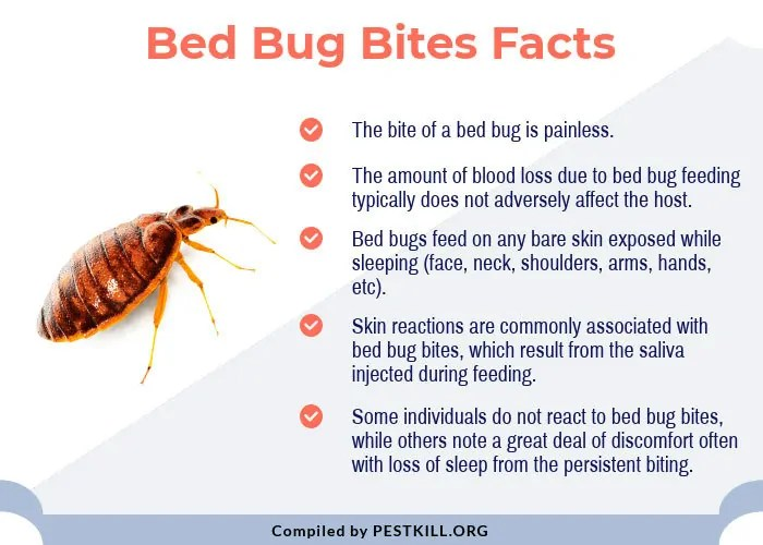 Bed Bug Bites Facts